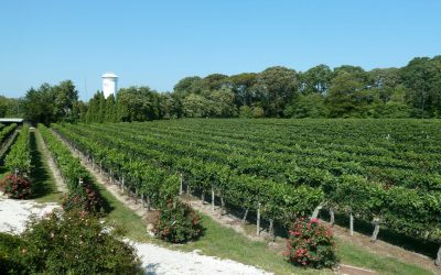 The Next Great Wine Frontier…New Jersey